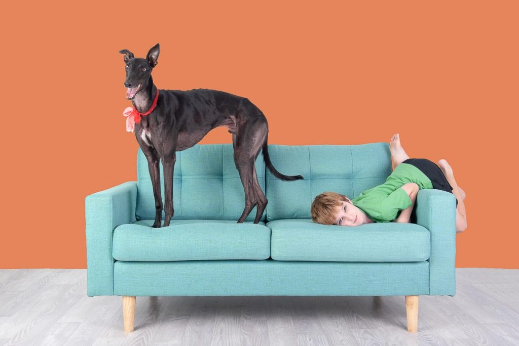 greyhound and child on couch in modern studio pet photography brisbane gold coast australia