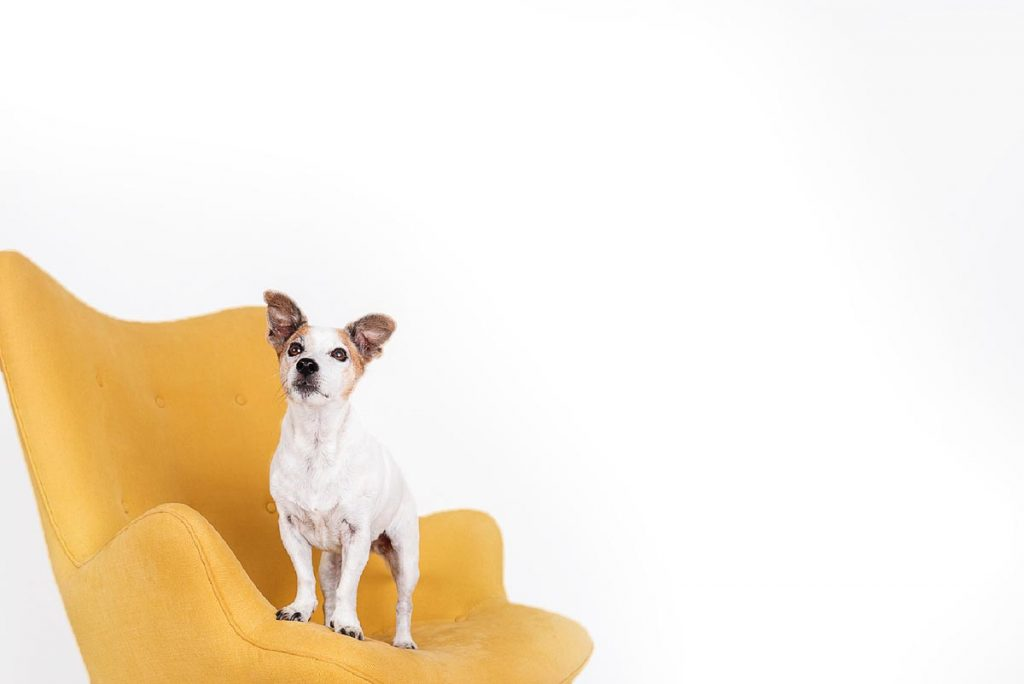 Gold Coast brisbane modern Pet Photography