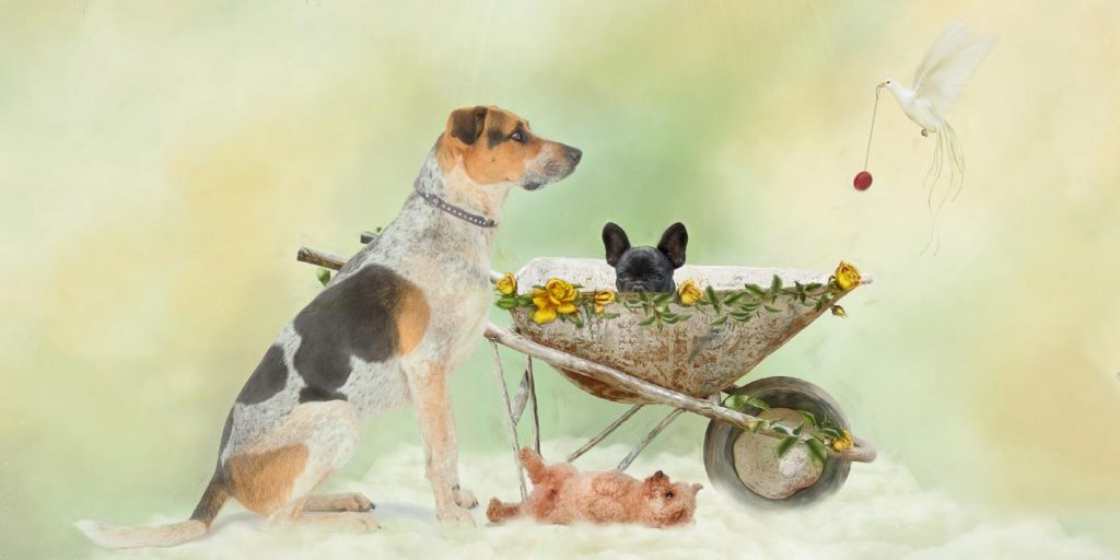 reverie series fantasy pet portrait of of dogs and puppies in flower covered wagon