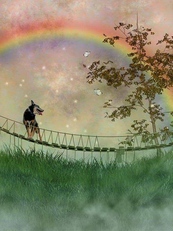 reverie series fantasy pet portrait of blue heeler standing on bridge under a rainbow with butterflies
