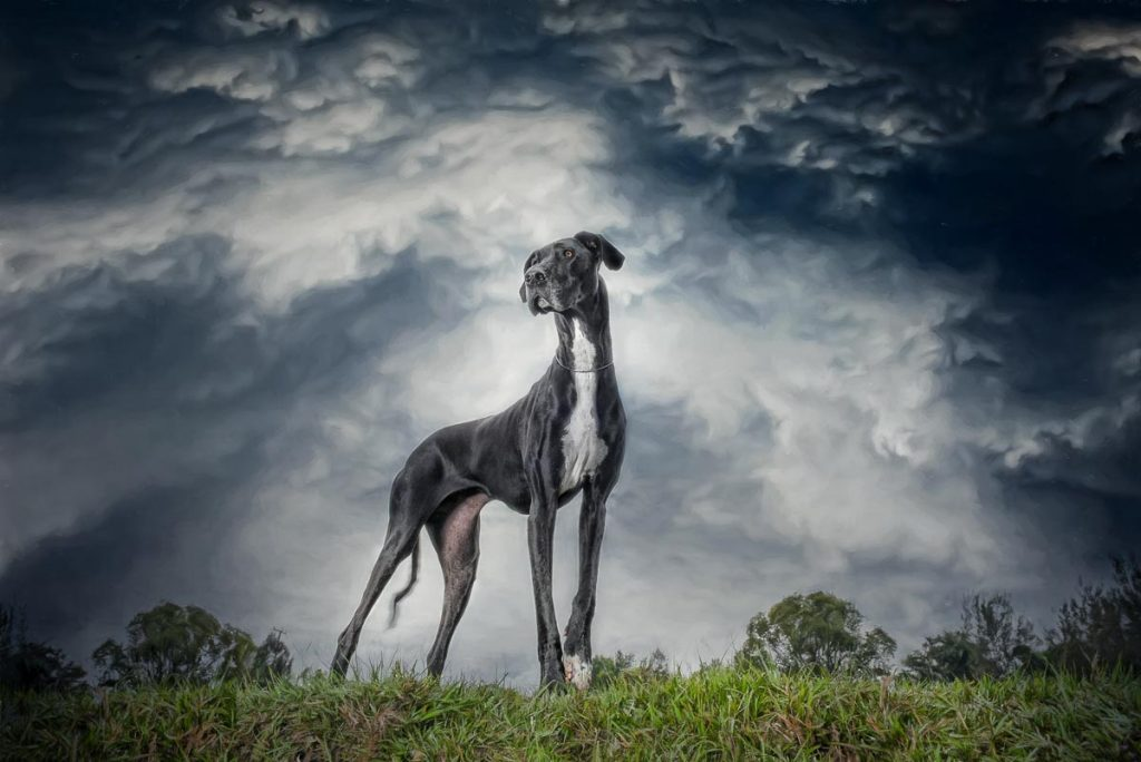 reverie series fantasy pet portrait of dramatic great dane under dark blue stormy skies