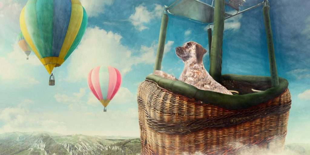 reverie series fantasy pet portrait of cute puppy in hot air balloon basket up in the clouds with blue sky