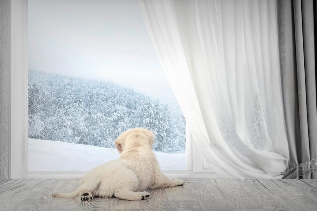 reverie series fantasy pet portrait of fuzzy puppy in front of wintery outlook through window