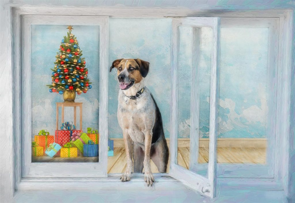 reverie series fantasy pet portrait of multi colored dog with christmas tree and presents