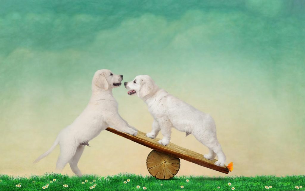 reverie series fantasy pet portrait of two labrador puppies