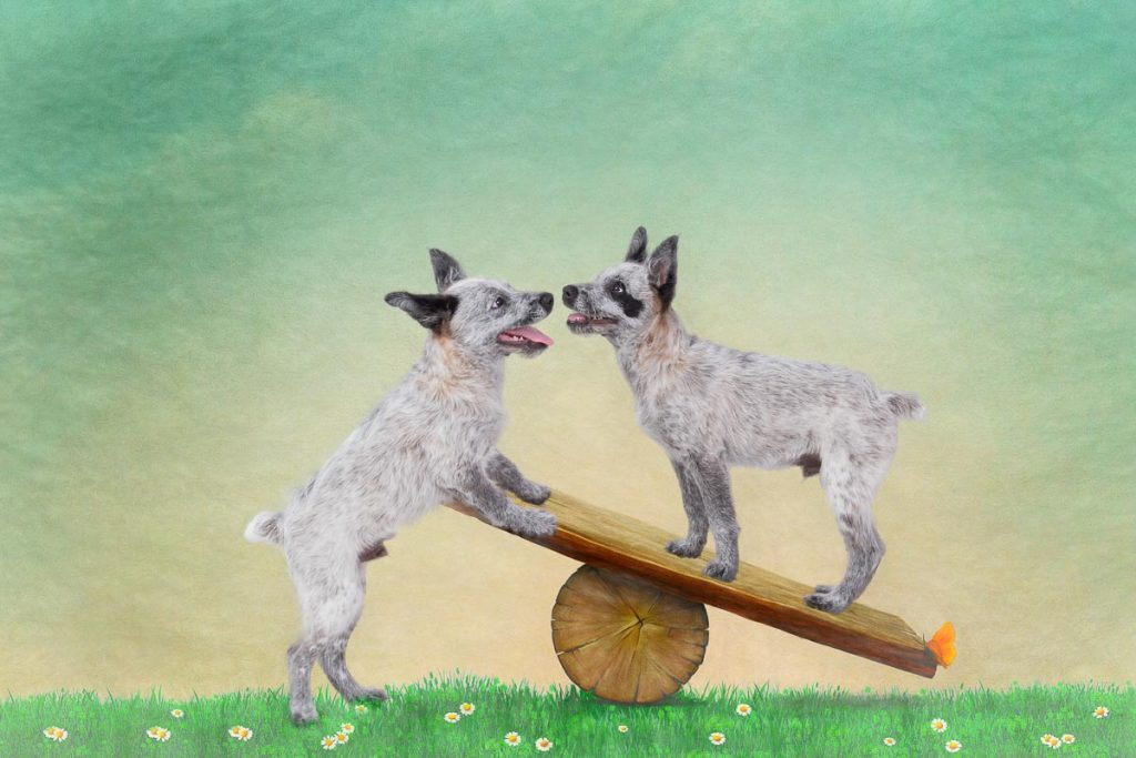 reverie series fantasy pet portrait of two heeler puppies